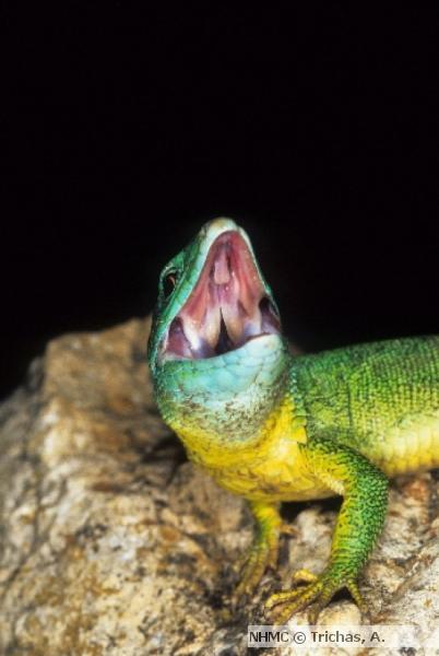 μουσείο φυσικής ιστορίας σάββατα με τους επιστήμονες τα ζώα των μύθων και των θρύλων