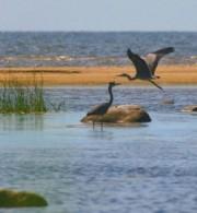 παραγκαμιάν υποβάθμιση περιβάλλον natura κρήτη wwf