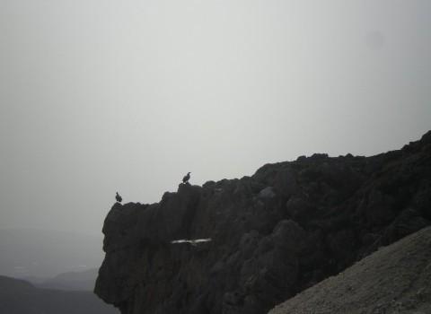 γυπας κέντρο αποκατάστασης γόρτυνα γέργερη ψηλορείτης