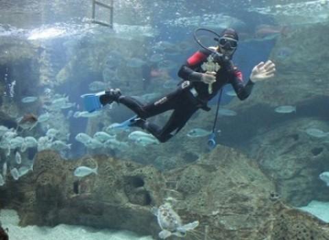 αγιασμός θαλασσόκοσμος ενυδρείο cretaquarium 0b244265de3