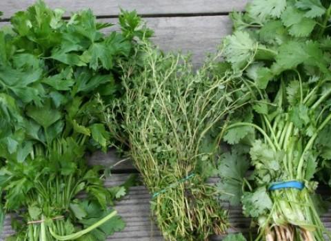 αρωματικά φυτά σεμινάριο φαρμακευτικά κρήτη καλλιέργεια