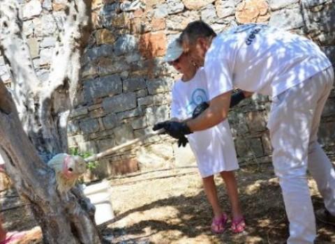 δέντρα φροντίδα creta maris κρητική χλωρίδα συντήρηση