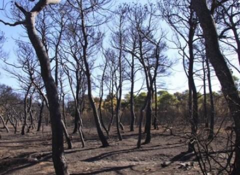 δάσος αναγέννηση αναδάσωση