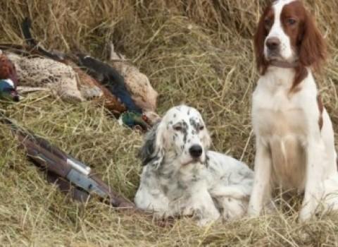 κυνηγετικά σκυλιά μφικ δηλητηρίαση τραυματισμοί σεμινάριο πρώτων βοηθειών