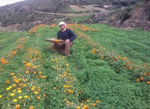 Ρουσσα Γη, Χλουβεράκη Σητεία αρωματικά φυτά