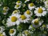 αρωματικά φυτά μουσείο φυσικής ιστορίας