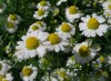 αρωματικά φυτά μουσείο φυσικής ιστορίας σάββατα με τους επιστήμονες