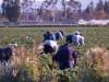 ημερίδες αγρότες πρωτογενής τομέας δήμος Αγίου Βασιλείου